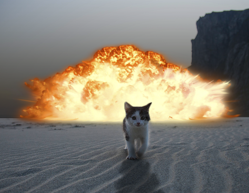 Cat on Beach walking away from Explosion by ifindkarma, on Flickr