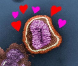 influenza virus by kat m research, on Flickr